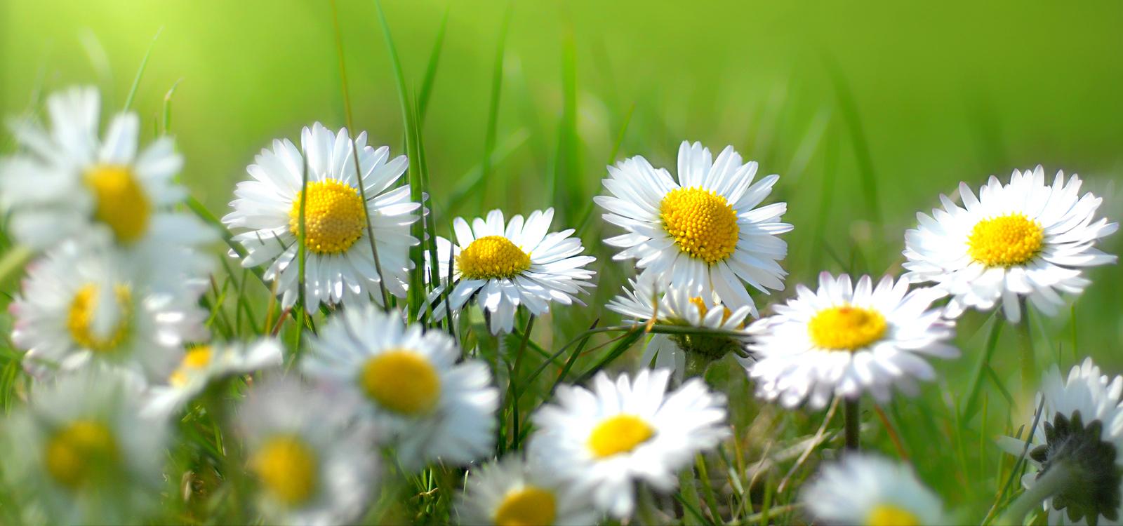 british wild flower plants  home, Beautiful flower