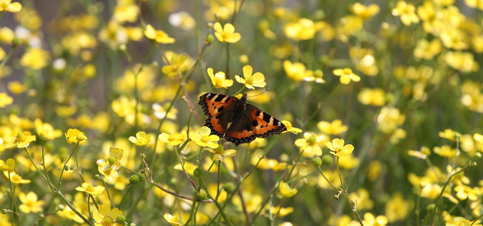 British Wild Flower Plants Home